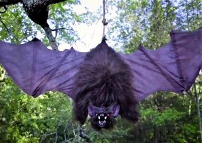 halloween-party-rental-virginia-fredericksburg-bat