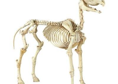halloween-party-rental-virginia-fredericksburg-halloween-horse