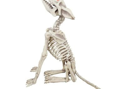 halloween-party-rental-virginia-fredericksburg-skeletondog
