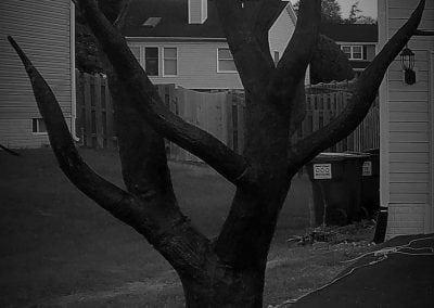 halloween-party-rental-virginia-fredericksburg-tree2